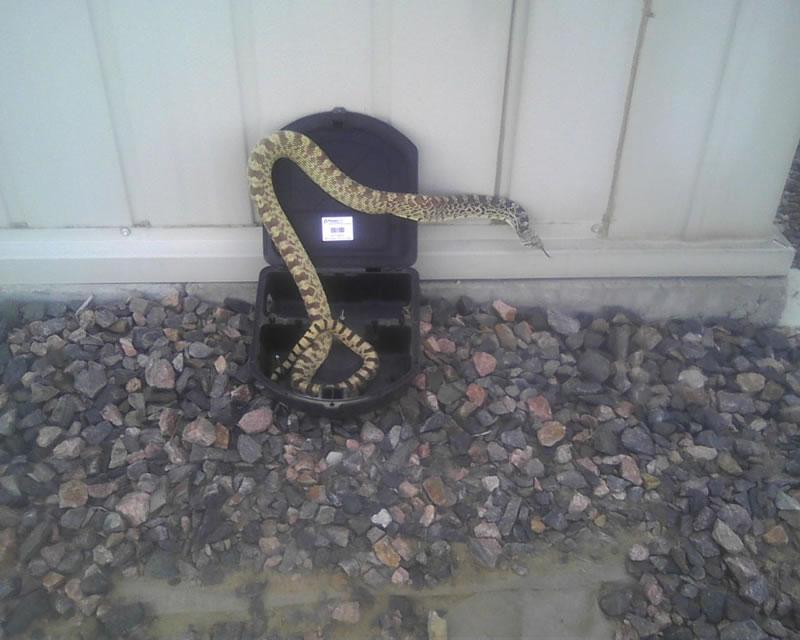 Snake Control